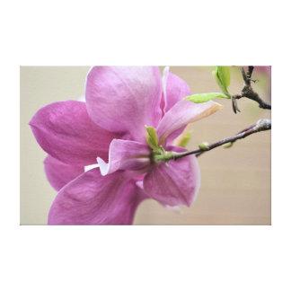 ピンクのチューリップ木の花 キャンバスプリント