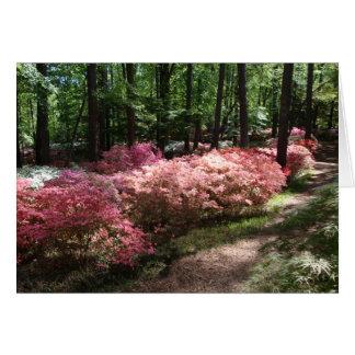 ピンクのツツジの森林道 カード
