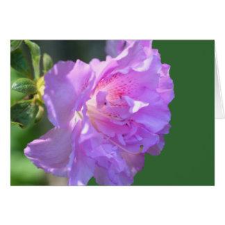 ピンクのツツジの花の写真撮影カード カード