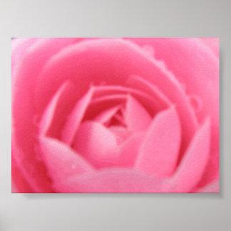 ピンクのツバキのプリント ポスター
