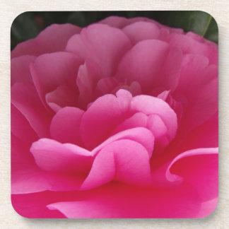 ピンクのツバキの花の終わり コースター