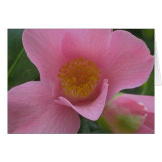 ピンクのツバキ カード