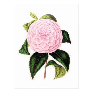 ピンクのツバキ ポストカード