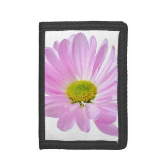 ピンクのデイジーによってはデイジーの花の花柄のテンプレートが開花します