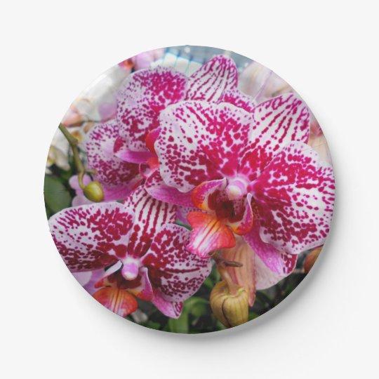 ピンクのデンドロビウムの蘭 ペーパープレート