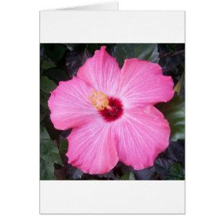 ピンクのハイビスカス カード