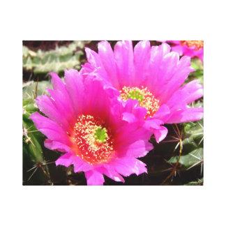ピンクのハリネズミサボテンの花 キャンバスプリント