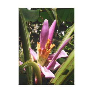 ピンクのバナナの花 キャンバスプリント