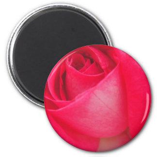 ピンクのバラのクローズアップ マグネット