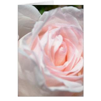 ピンクのバラのマクロ カード