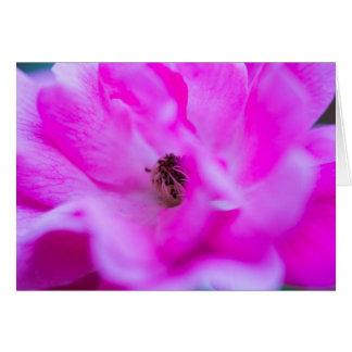 ピンクのバラの花のマクロAbsractカスタマイズ可能なカード カード