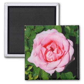 ピンクのバラの花の磁石 マグネット