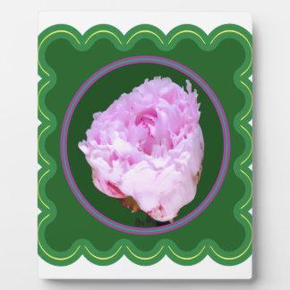 ピンクのバラの花の100個のギフトの花の写真のグラフィック フォトプラーク