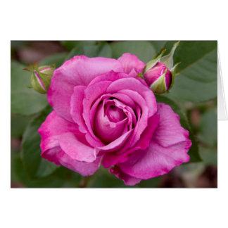 ピンクのバラのjjheleneのバレンタインの挨拶状 カード
