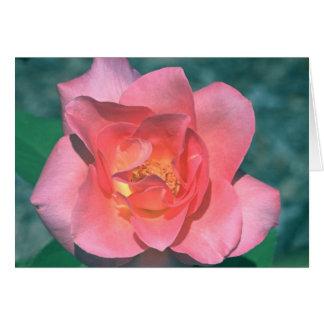 ピンクのバラカード カード