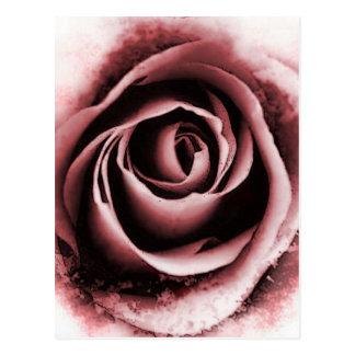 ピンクのバラ ポストカード