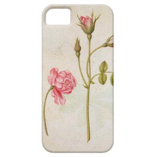 ピンクのバラ、c.1568 iPhone SE/5/5s ケース