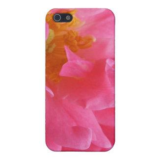 ピンクのバラ iPhone 5 カバー