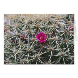ピンクのバレルのcatusの開花 カード
