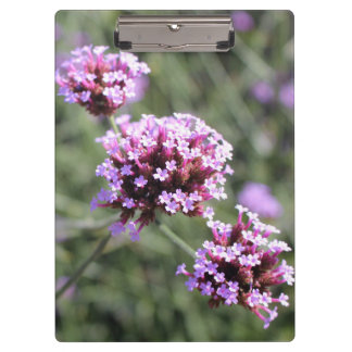 ピンクのバーベナの花の小枝 クリップボード