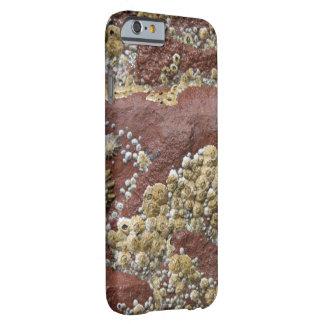 ピンクのフジツボ及びカサガイのiPhoneの場合 Barely There iPhone 6 ケース