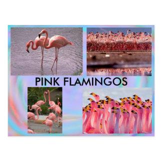 ピンクのフラミンゴの郵便はがき ポストカード