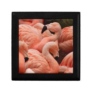 ピンクのフラミンゴ ギフトボックス