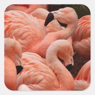 ピンクのフラミンゴ スクエアシール