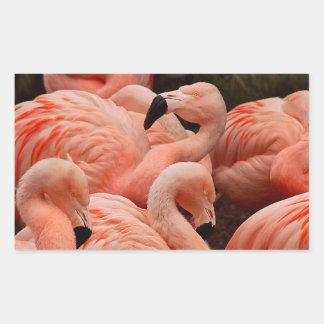 ピンクのフラミンゴ 長方形シール