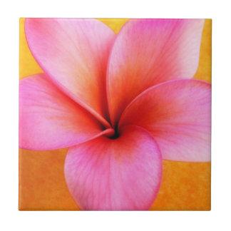 ピンクのプルメリアのFrangipaniのハワイの花のハワイアン 正方形タイル小