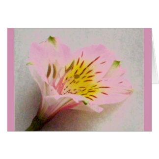 ピンクのペルーユリ-中ブランク カード