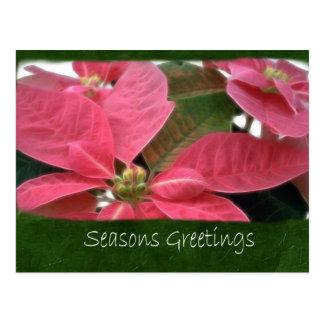 ピンクのポインセチア3 -季節のごあいさつ ポストカード