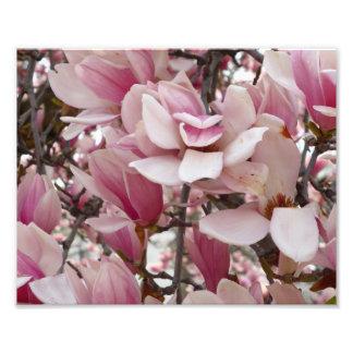 ピンクのマグノリアの花 フォトプリント