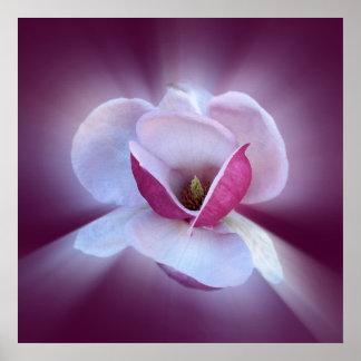 ピンクのマグノリアの陰 ポスター