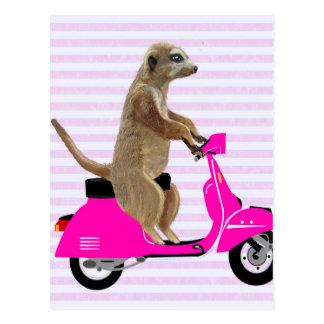 ピンクのモペット2のMeerkat ポストカード