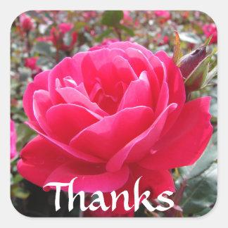 ピンクのロマンスのばら色のステッカーありがとう スクエアシール