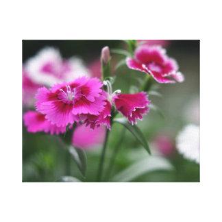 ピンクのロマンスのナデシコの開花、キャンバスの覆いのプリント キャンバスプリント