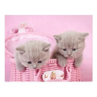 ピンクの子ネコ ポストカード