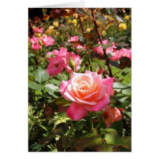 ピンクの庭は上がりました カード