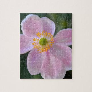 ピンクの日本のアネモネの花 ジグソーパズル