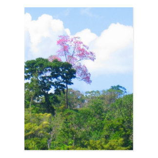 Pink Tree Venezuela Jungle Landscape