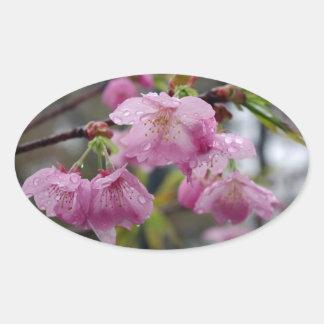 ピンクの桜の雨滴 楕円形シール