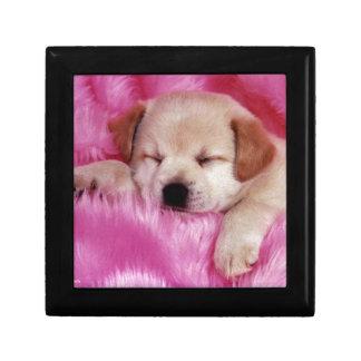 ピンクの毛皮のかわいい子犬 ギフトボックス