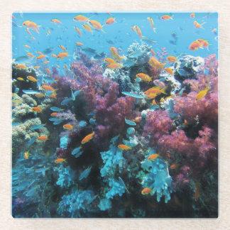 ピンクの珊瑚 ガラスコースター