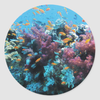ピンクの珊瑚 ラウンドシール