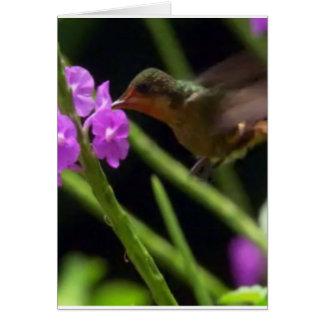 ピンクの花のかわいいハチドリ99上のぶんぶんいう鳥 カード