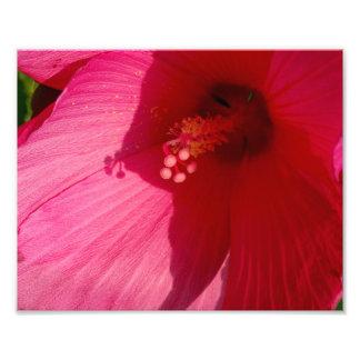 ピンクの花のコダック専門の写真の紙(サテン) フォトプリント