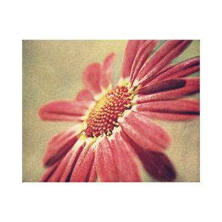 ピンクの花のヒナギク キャンバスプリント