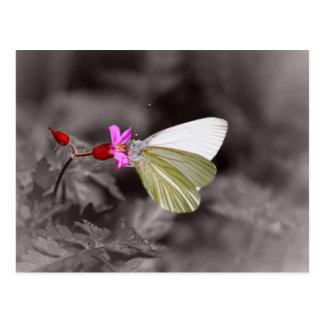 ピンクの花の蝶 ポストカード
