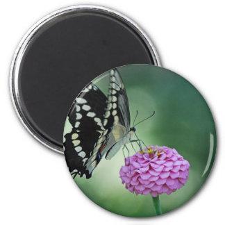 ピンクの花の黒いアゲハチョウの蝶 マグネット